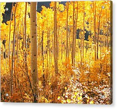 High Country Gold Acrylic Print