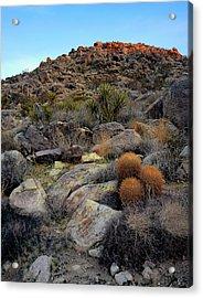High Desert Garden Acrylic Print