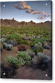 High Desert Hues Acrylic Print