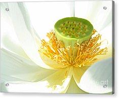 High Key Lotus Acrylic Print by Sabrina L Ryan