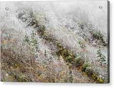 High Mountain Forest, Covered By Snowy Hoar Frost, Huanglong Acrylic Print by Sergey Orlov