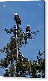 High Perch Acrylic Print