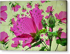 High Tea With Pink Hibiscus Acrylic Print by Rose  Hill