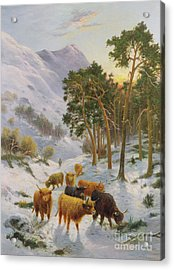 Highland Cattle In A Winter Landscape Acrylic Print by Charles Watson