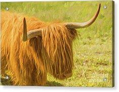 Highland Cow Acrylic Print by Veikko Suikkanen