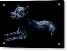 Highland Terrier Acrylic Print