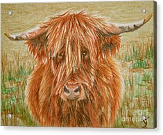 Highlander Aceo Acrylic Print by Yvonne Johnstone