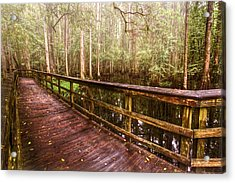 Highlands Hammock Acrylic Print by Debra and Dave Vanderlaan