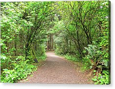 Hiking Trail Along Lewis And Clark River Acrylic Print