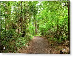 Hiking Trail Through Forest Along Lewis And Clark River Acrylic Print
