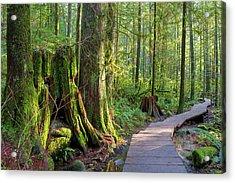 Hiking Trail Through Forest In Lynn Canyon Park Acrylic Print