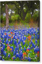 Hill Country Forest Acrylic Print