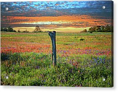 Hill Country Heaven Acrylic Print by Lynn Bauer