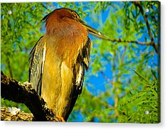 Hill Country Perch Acrylic Print by David  Norman