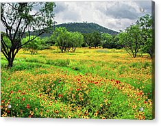 Hill Country Wildflowers Acrylic Print