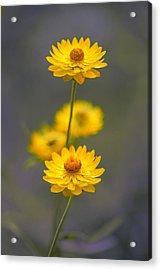 Hillflowers Acrylic Print