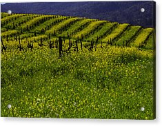 Hills Of Mustard Grass Acrylic Print by Garry Gay