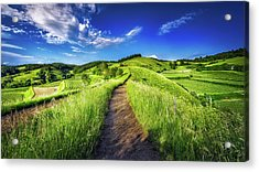 Hills Of Summer Acrylic Print by Claudio Testa