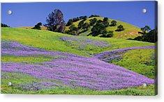 Hillside Carpet Acrylic Print