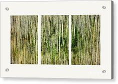 Hillside Forest Acrylic Print