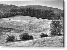 Hillside Hay Acrylic Print
