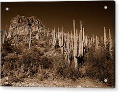 Hillside Acrylic Print by John Gee