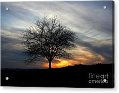Acrylic Print featuring the photograph Hillside Morning by Everett Houser