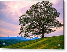 Hilltop Oak Acrylic Print
