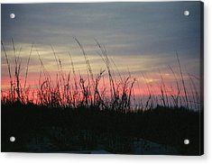 Hilton Head Grass At Sunrise Acrylic Print