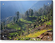 Himalayan Stepped Fields - Nepal Acrylic Print