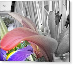Hint Of Spring Acrylic Print by Sian Lindemann