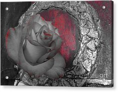 Hints Of Red - Rose Acrylic Print