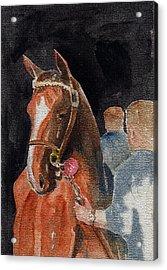 Hip No. 61 Chestnut Colt Acrylic Print by Arline Wagner