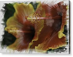 Acrylic Print featuring the photograph Hippi Hibiscus by Lori Mellen-Pagliaro