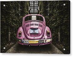 Hippie Chick Love Bug Acrylic Print by Scott Norris