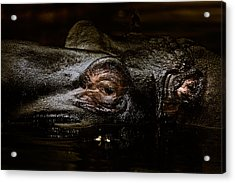 Acrylic Print featuring the photograph Hippo by Joerg Lingnau