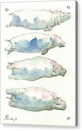 Hippo Swimming Study Acrylic Print
