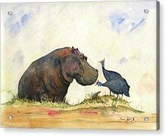 Hippo With Guinea Fowls Acrylic Print