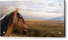 His Domain Acrylic Print by Ron  McGinnis