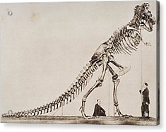 Historical Illustration Of Dinosaur Acrylic Print