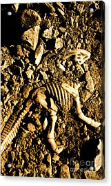 History Unearthed Acrylic Print