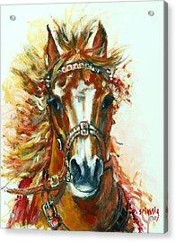 Hmar Pur-sang Arabe Acrylic Print by Josette SPIAGGIA