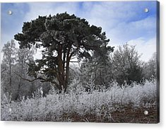 Hoar Frost Acrylic Print by Hazy Apple