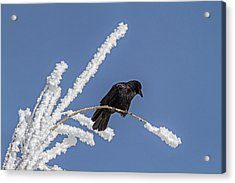 Hoarfrost And The Crow Acrylic Print