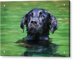 Hobie 1 Acrylic Print by Lori Deiter
