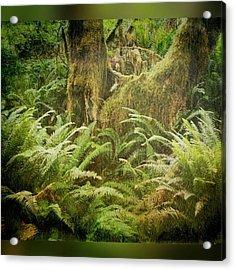 Hoh Rain Forest On The Olympic Acrylic Print