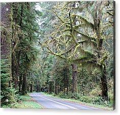 Hoh Rain Forest Road Acrylic Print
