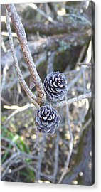 Acrylic Print featuring the photograph Holding On by Angi Parks