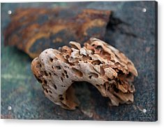 Holey Wood Acrylic Print by WB Johnston