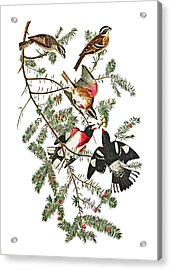 Acrylic Print featuring the photograph Holiday Birds by Munir Alawi